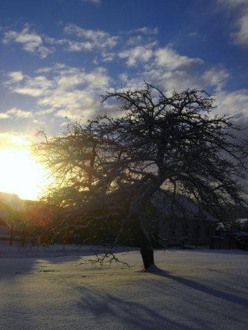 image winter-2010-11-029-jpg